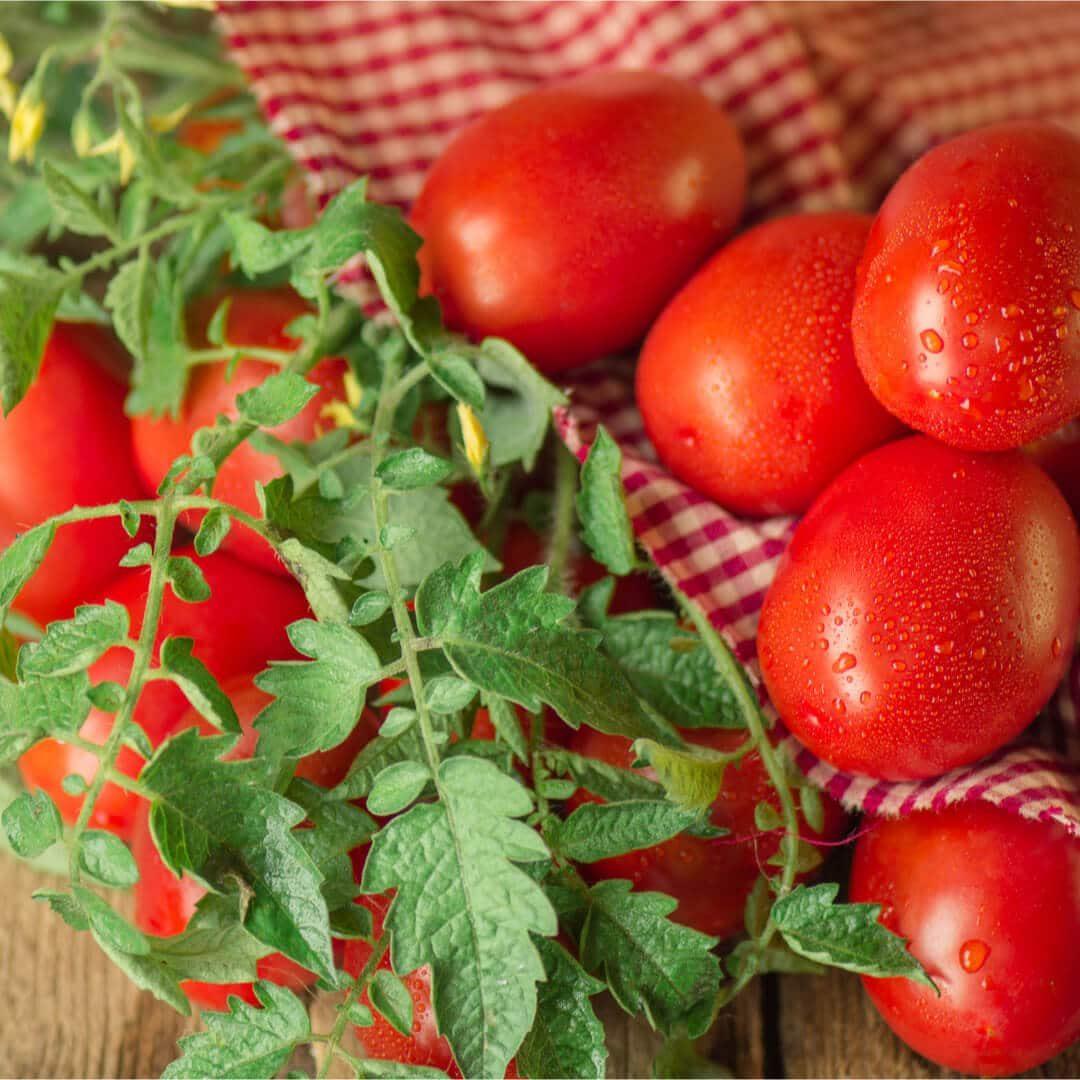 Pizza tomaten kiezen